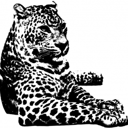 bio-leopard-medium